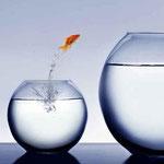 Ein Fisch springt  aus einem kleinen Aquariumglass in ein Großes