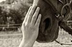 Eine Hand auf der Nase von einem Pferd