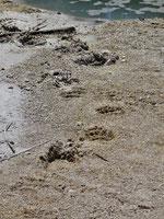 Black Basin - Betreten verboten - gilt nicht für Bären