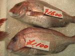 浦安魚市場のぴちぴちの鯛