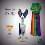 Dracarya Fate Rex - Best Op. Sex Kitten
