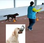ARO Hundetraining Seminar