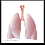 Entgiftung über die Lunge (© La Gorda - Fotolia.com)
