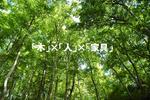 木×人×家具