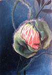 Papaver orientale 2014, Öl auf Sperrholztafel, 21x14.8
