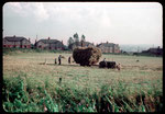 Harvesting the hay at Frankley Green 1953. Photograph by Phyllis Nicklin. See Acknowledgements Keith Berry.