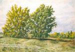 Два дерева