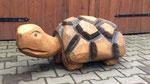 Schildkröte...