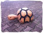 Schildkröte geprannt ca. 60cm (Holzart Eiche, geölt)