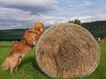 Training im Alltag-er sucht Käse