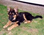 Klein-Ronja mit 5 Monaten