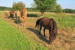 Pferde helfen bei der Pflege