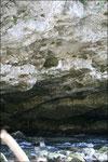 Nid en paroi au dessus du torrent - Appoura - 64