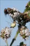 La mouche se débat tant et si bien qu'elle arrive presque à se libérer © JlS