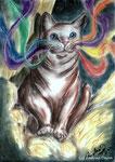 aus der Seria Rainbowcats