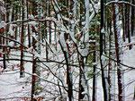 Naturstruktur 11 (Fotografie eines Winterwaldes)
