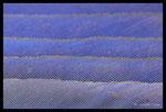 Plumes de Rollier d'Europe (Coracias garrulus)