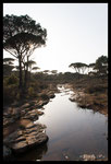 Ruisseau temporaire en plaine des Maures