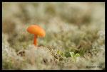 Champignons en plaine des Maures (83)