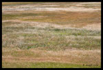 Prairie dans la vallée de la Môle