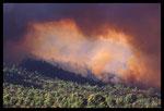 Incendie dans le massif des Maures (2003)