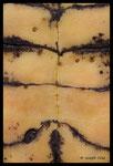 Plastron de Cistude d'Europe (Emys orbicularis)