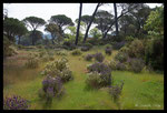 Plaine des Maures au printemps