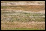 Prairie de la Vallée de la Môle