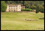 Pastoralisme au château de la Môle (83)