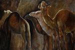 Kamele 100x150cm, verkauft