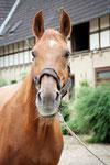 Ferdinand  1988-2013