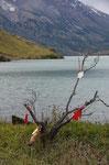 Heiligabend am Lago Nordenskjöld im NP Torres del Paine