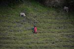 Schafhirtin barfuß in steilem Gelände
