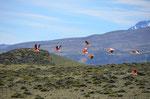 Flamingos im Abflug