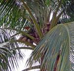 Finca Gloria in der Nähe von Guayaquil
