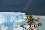 Gletscher Perito Moreno in Argentinien bei El Calafate