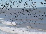 Tausende von Papageien