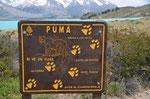 Was zu tun ist, wenn ein Puma vorbeikommt
