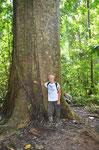 Ganz schön groß der Baum