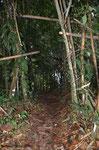Auf Erkundungstour im Urwald