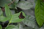 Jede Menge Schmetterlinge