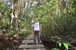 Einsamer Wanderer im Urwald