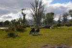 Auf dem Gelände der Estancia Haberton, 200qkm groß