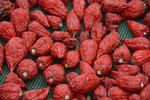 Richtig scharfe Chilli Früchte