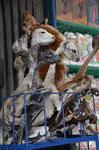 Lama Föten auf dem Markt in La Paz. Werden beim Hausbau in alle 4 Ecken eingemauert und soll Glück bringen