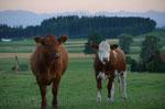 Unsere Heimat - Oberbayern