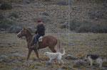 Gaucho reitet heim nach Kneipenbesuch