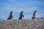 Auf der Pinguininsel