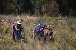 Unterwegs zum Titicacasee
