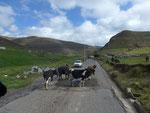 Strassenblokade auf dem Weg nach Ambato